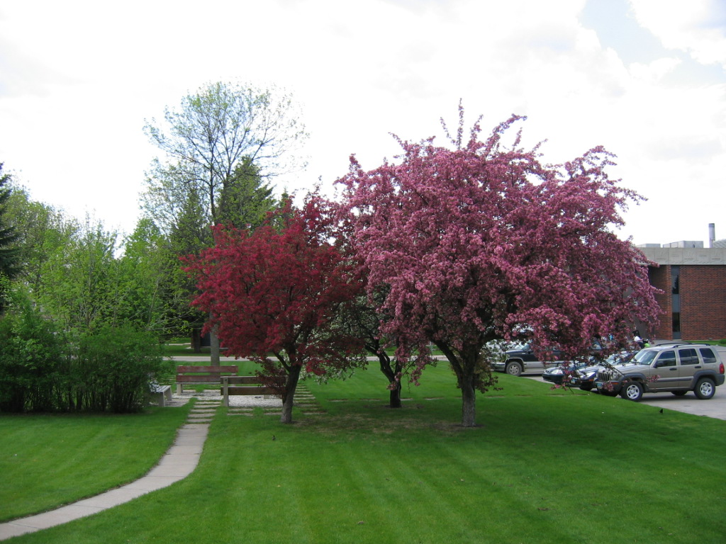 Flowering trees by library