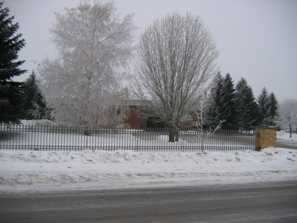 Trees with hoarfrost by the library